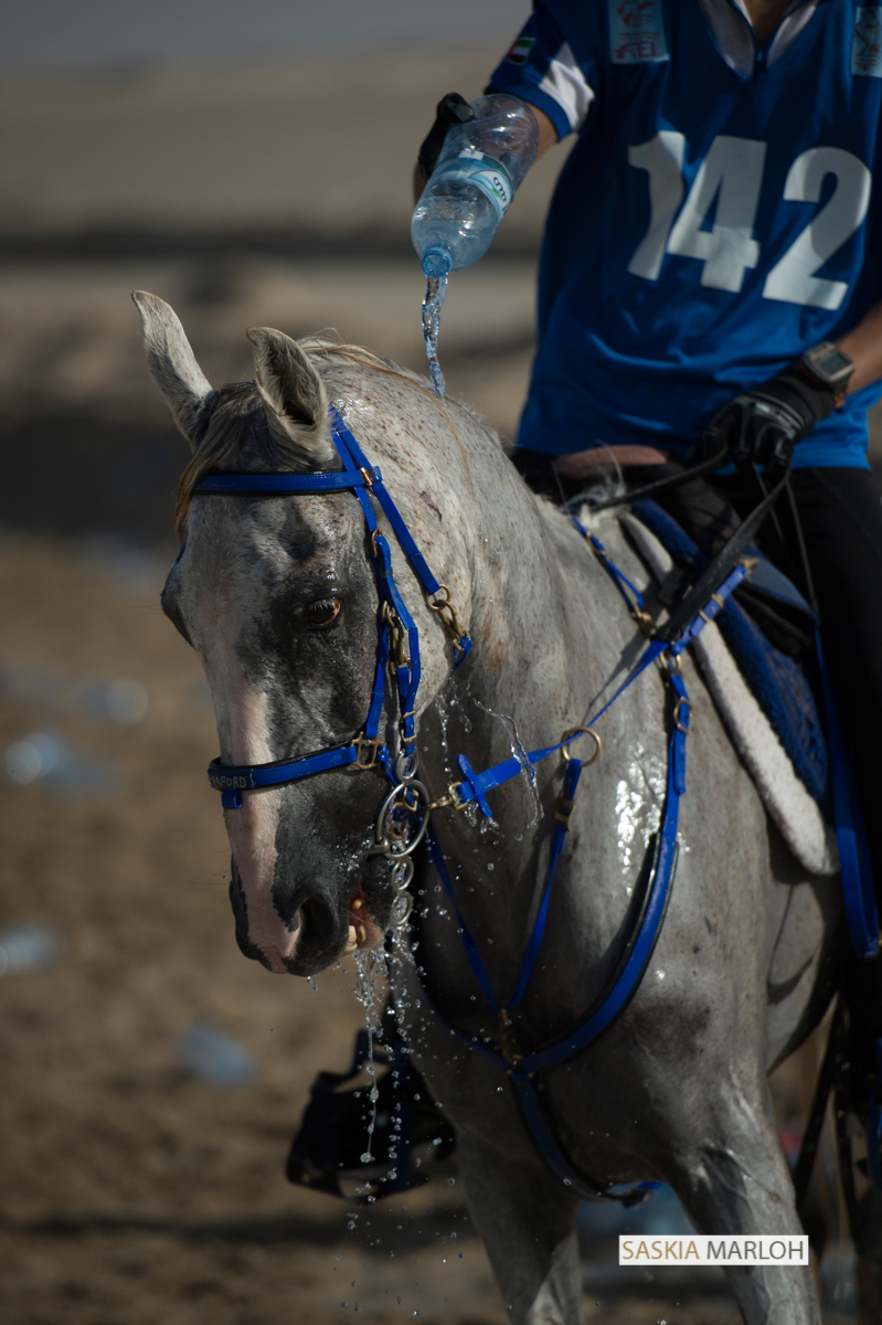 40k-horse-endurance-race-bouthieb-emirates-uae-female-wedding-photographer-16