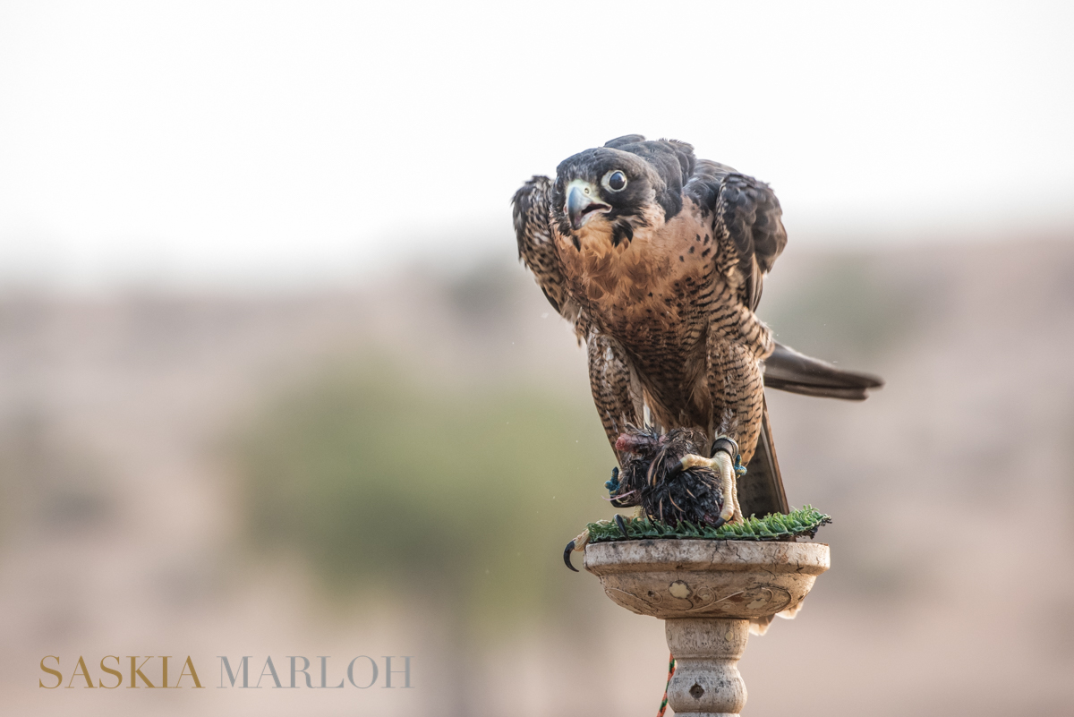 falcon-royal-shaneen-banyan-tree-uae-female-wedding-photographer9